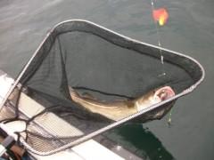 fischzuege berichte aus der hochseefischerei